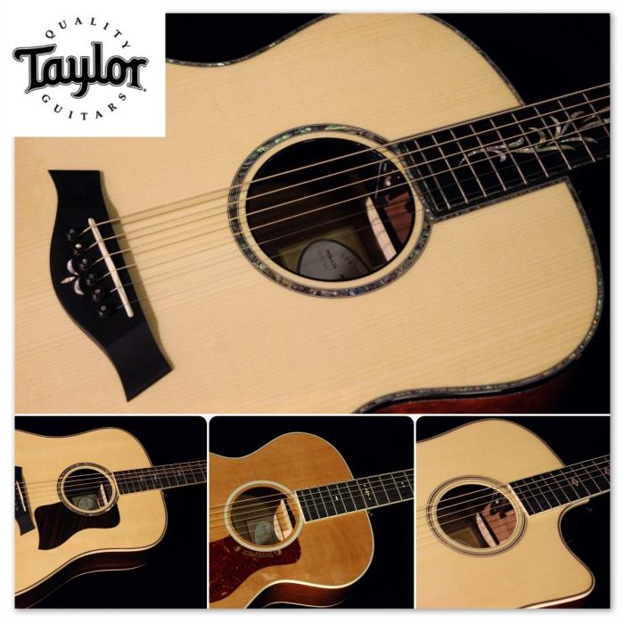 Taylor gino